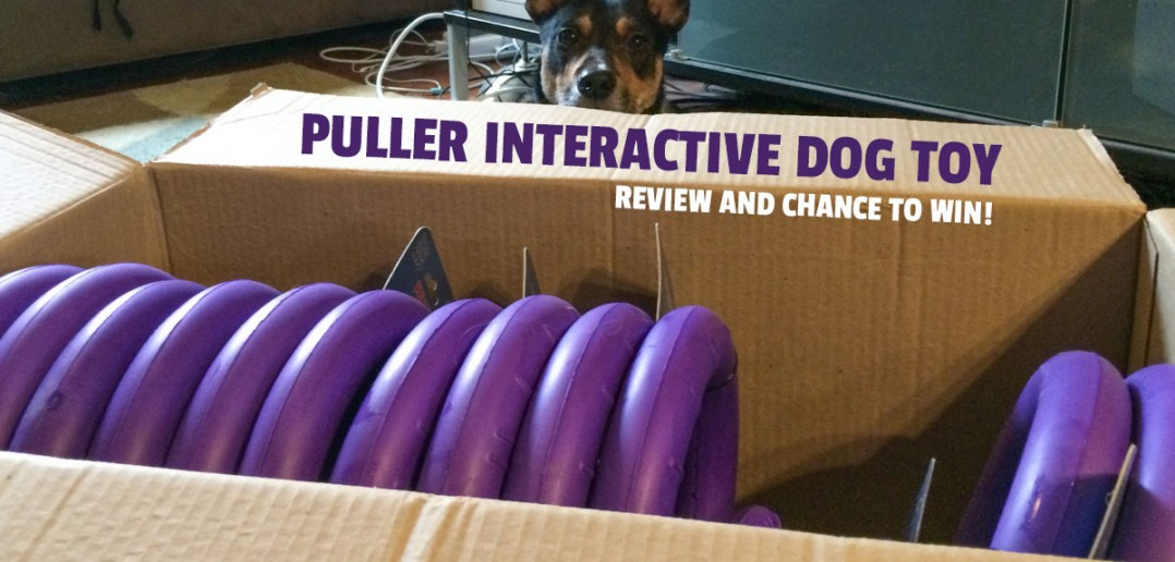 Best Interactive Toys Dog