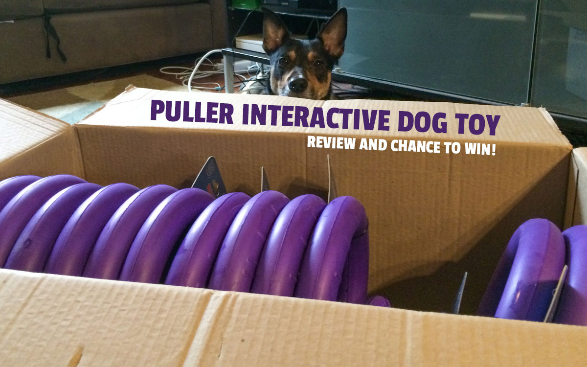 Contests and sweepstakes to win great dog products