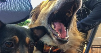 My dog is aggressive