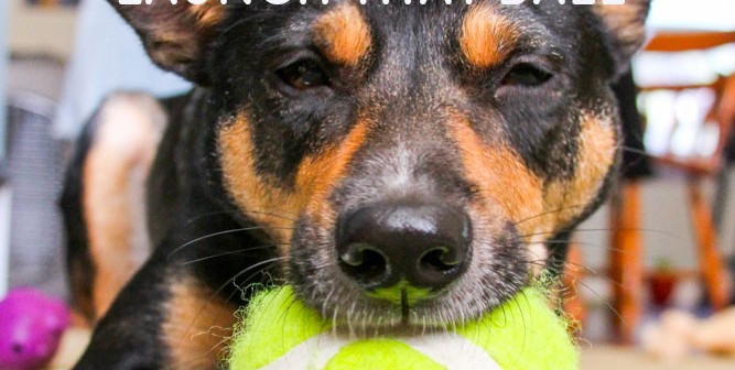 Tennis ball cannon for dog