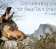 Flea and tick preventatives
