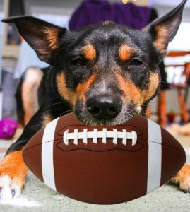 Mort-Football-jdehaan-269x300 Super Dog Sunday: Submit a photo of your sporty dog