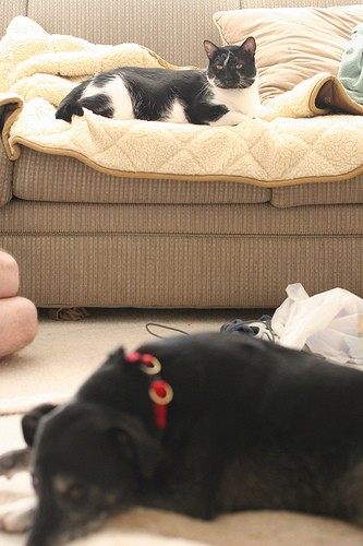 4211098585_424bcc0484 10 reasons to adopt a senior dog