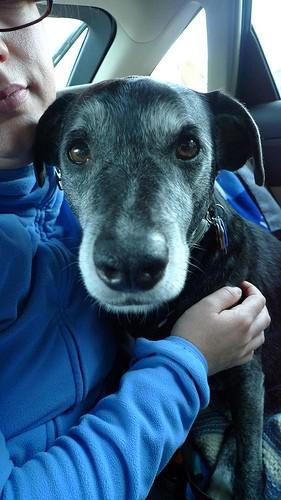 5039161225_1e8fc4533b 10 reasons to adopt a senior dog