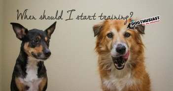 when-start-training-351x185-7f-351x185 A dog blog for active dogs