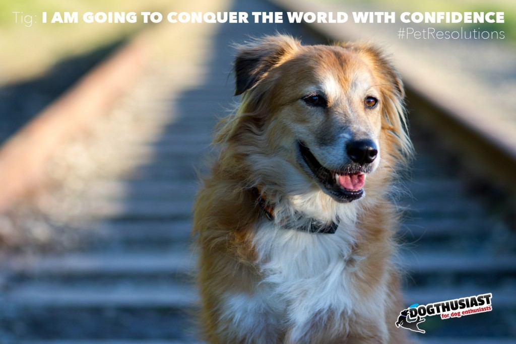 Dog Training Books Pdf Free Download