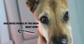 doorway-featured-351x185-7f-351x185 A dog blog for active dogs