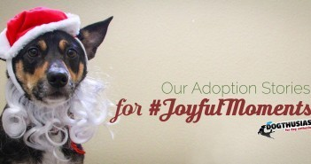 joyfulmoments-featured-351x185-7f-351x185 A dog blog for active dogs