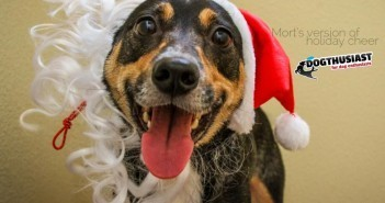 santacraze-351x185-7f-351x185 A dog blog for active dogs
