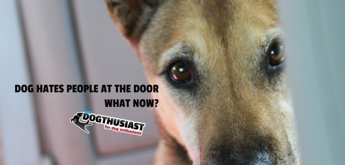 doorway-featured-702x336-7f-702x336 A dog blog for active dogs