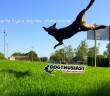 tips-flies-off-handle-110x96 A dog blog for active dogs