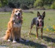 twogreatdogs-110x96 A dog blog for active dogs