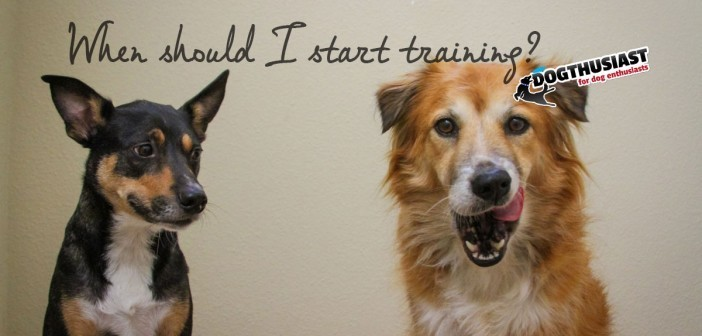 when-start-training-702x336-7f-702x336 A dog blog for active dogs